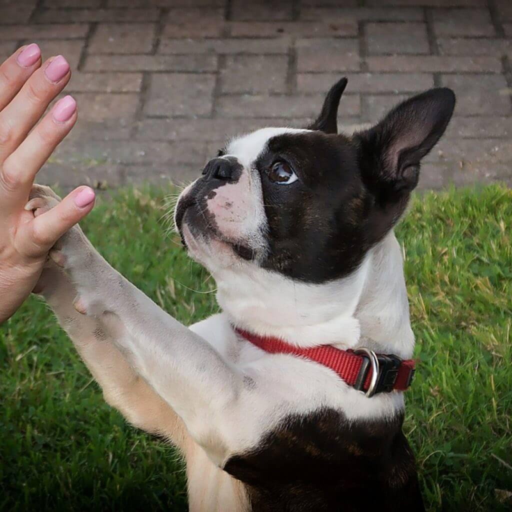 Állapotfelmérés - Kutyadolog