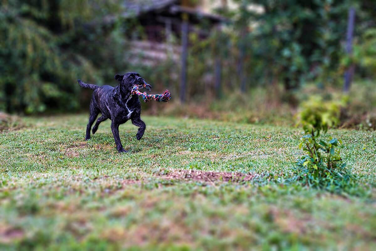 Prevenciós Kezelés Kutyáknak