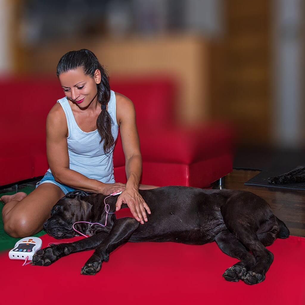TENS kezelés kutyáknak