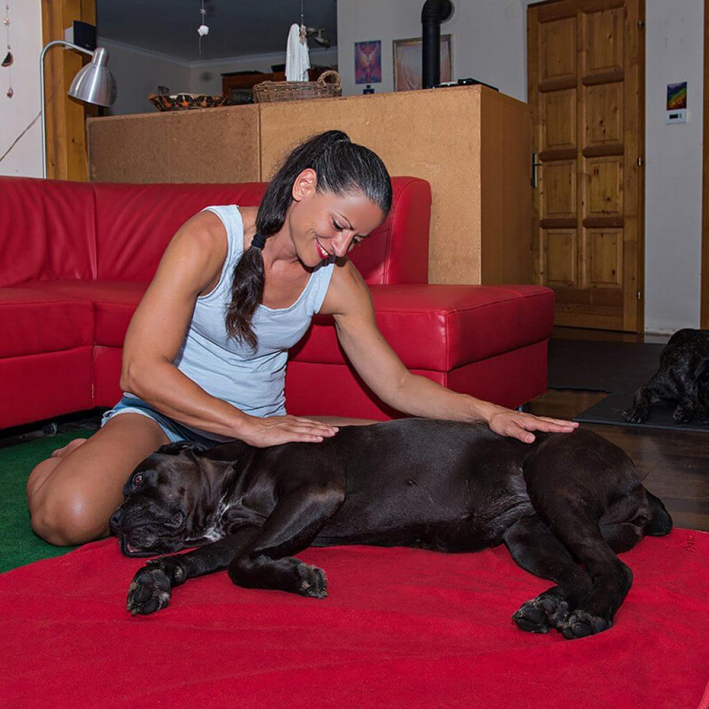 Thermoterápia Kutyáknak